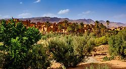 Tinghir oasis in the Todra Valley, Morocco<br /> <br /> (c) Andrew Wilson   Edinburgh Elite media