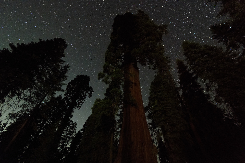 Sequoia trees beneath the night sky in Grant Grove, Kings Canyon National Park