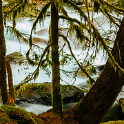Sol Duc Rain Forest (Cedar and Fir) with Sol Duc River behind in Olympic National Park.