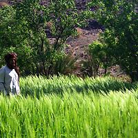 Africa, Morocco, Skoura. Local villager crosses field near Skoura.