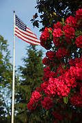 USA, Oregon, Salem, State Capitol, Azaleas and US flag.