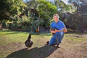 Senior adult man holding chicken in his garden