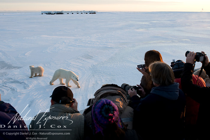 Tundra Buggy guests gather on the back deck to photograph a mother polar bear and her cub near Tundra Buggy Lodge. Cape Churchill, Manitoba.