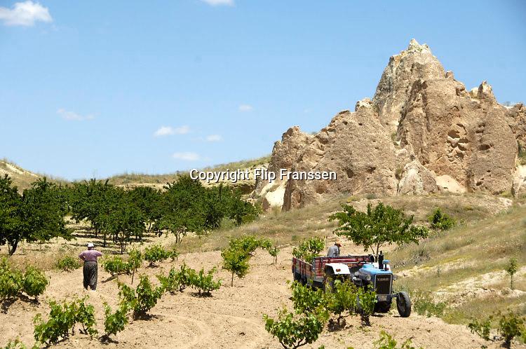 Turkije, turkey, Goreme, 7-6-2016Een boer en zijn vrouw planten fruitbomen op hun land in de streek capadocieFoto: Flip Franssen