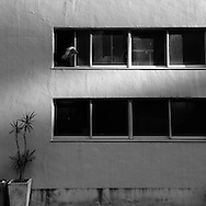 June 2, 2016, Tokyo, Japan: An afgan hound dog peers out the window on a backstreet ofthe Shinjuku district of Tokyo. Photo by Torin Boyd.