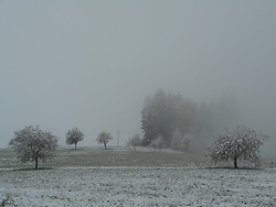 Germany, Sankt Peter (Black Forest) - May 4, 2019.Snow in spring.Cold air and snow return to Germany. Snow-covered cherry trees in spring (Credit Image: © Antonio Pisacreta/Ropi via ZUMA Press)