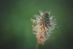 THEMENBILD - ein Blütendetail eines Grashalm, aufgenommen am 05. August 2018, Kaprun, Österreich // a flower detail of a blade of grass on 2018/08/05, Kaprun, Austria. EXPA Pictures © 2018, PhotoCredit: EXPA/ Stefanie Oberhauser