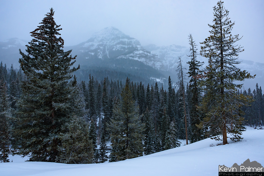 This wasn't the sunrise I was hoping for. But I had to stop at this overlook for The Thunderer mountain and just appreciate the perfect silence. The snowflakes in the air seemed to absorb all sound and the thick forest blocked out the winds that were present further up Lamar Valley.