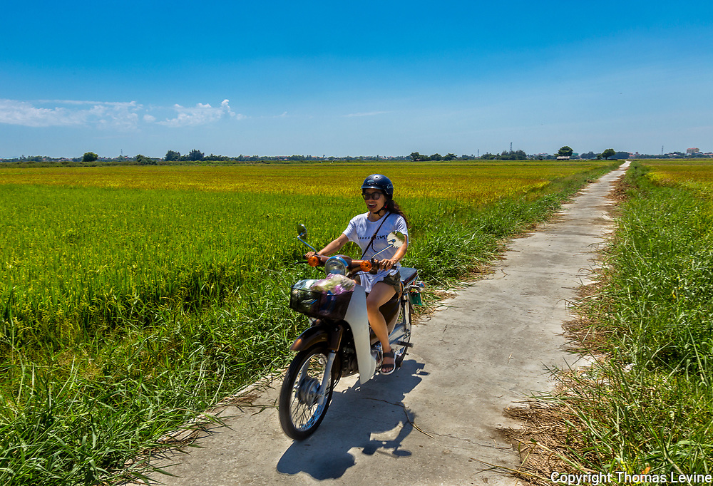 Asian Woman rides her motorcycle in-between the rice fields in Hoi An, Vietnam