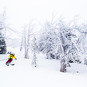 Natalie Segal skis through ghostly rhime covered trees off of Teton Pass near Wilson, Wyoming.