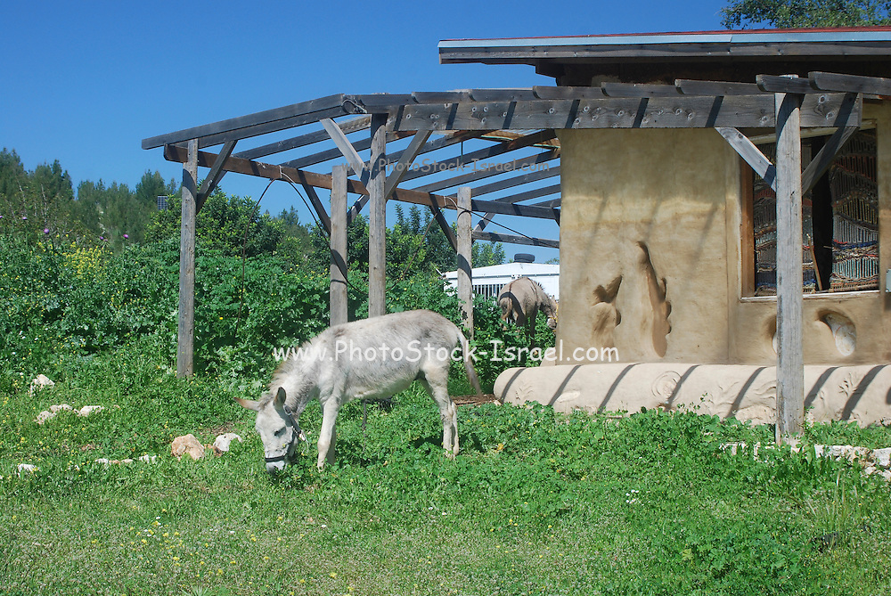 Israel, Ecological farm, House built from mud and reused materials