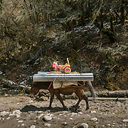 A horse carries metal roof sheeting and a plastic toy Made in China up to the Laya village. On the trek going from Laya village to the beginning of the drivable road.
