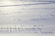 Goshen, New York - Snow-covered fields on a farm on Feb. 10, 2013.