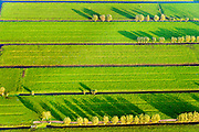 Nederland, Zuid-Holland, Alblasserwaard, 28-10-2014; weialnden met bomen in het avondlicht, Alblassewaard.<br /> Meadows in the evening light in the polder.<br /> luchtfoto (toeslag op standard tarieven); aerial photo (additional fee required); <br /> copyright foto/photo Siebe Swart