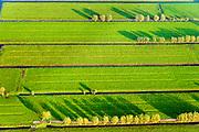 Nederland, Zuid-Holland, Alblasserwaard, 28-10-2014; weialnden met bomen in het avondlicht, Alblassewaard.<br /> Meadows in the evening light in the polder.<br /> luchtfoto (toeslag op standard tarieven); aerial photo (additional fee required); <br /> copyright foto/photo Siebe Swart
