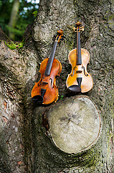 Pictured: Owen and Sasson violins respectively<br /> Violinists were on hand to play at the first public appearance of two instruments made in honour of war poets,  Wilfred Owen and Siegrfried Sassoons.  The violins, crafted by Steve Burnett and insured for £25,000 each, were played at the sycamore tree from which they were made at the Craiglockhart Campus of Napier University in Edinburgh. <br /> Ger Harley   EEm 7 August  2017