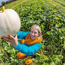 The pumpkin patch at Arnprior farm