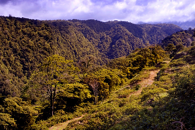 The Mass OF Vegetation, A Saturation Of Tropical Plants And Trees In Braulio Carrillo National Park, Costa Rica, Gives The Visitor A Sense Of Awe Because Of Its Beauty And Magnitude.