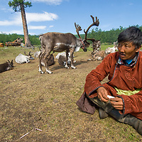 A Tsaatan reindeer herder wearing a traditional daftan called a del sits by his animals in Lake Hovsgol National Park, Mongolia.
