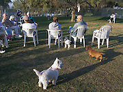 people gathering in a dog run USA