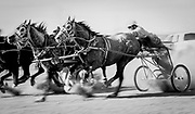 Chariot races in Riverton, Wyoming.
