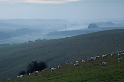 © Licensed to London News Pictures. 25/01/2014. Hampshire, UK. Sheep grazing at dawn in a field on the North Wessex Downs in Hampshire today (25/01/2014).  The UK is on alert for more strong winds and rain over the weekend. Photo credit : Rob Arnold/LNP