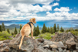 """""""Puppy Above Lake Tahoe 2"""" - Photograph of Golden Retriever puppy """"Quill"""" above Lake Tahoe."""