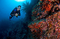 A Diver Inspects a Banded Sea Snake<br /> <br /> shot in Indonesia