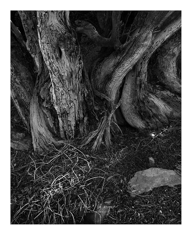 Gnarly textured tree full of character
