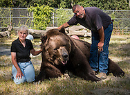 Otisville, New York - Jim Kowalczik and his wife Susan Kowalczik pose for a photograph with Jimmy, a 1,400-pound Kodiak bear, at the Orphaned Wildlife Center on Sept. 7, 2016. The Kowalcziks are licensed wildlife rehabilitators who run the center with the goal of providing safety and nurturing to animals that are truly orphaned and prepare them to be returned to a life in the wild.