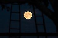 Hamptonburgh, New  York - The full moon rises over an apple orchard on Sept. 27, 2015.