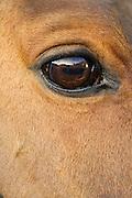Horse, Oxfordshire, United Kingdom.