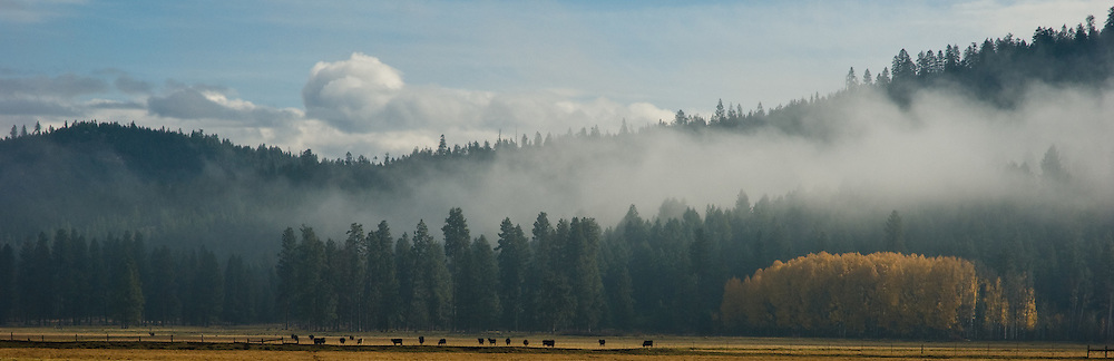 Fog slow rising from trees near a cattle ranch in the Klamath Basin in Oregon.  On the bottom right is a small grove of Aspen trees.