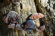 Fungi grows on a tree trunk