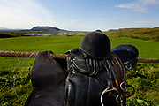 Horse riding in Southern Iceland. Fossness Farm. Riding equipment. Saddle and riding hat.