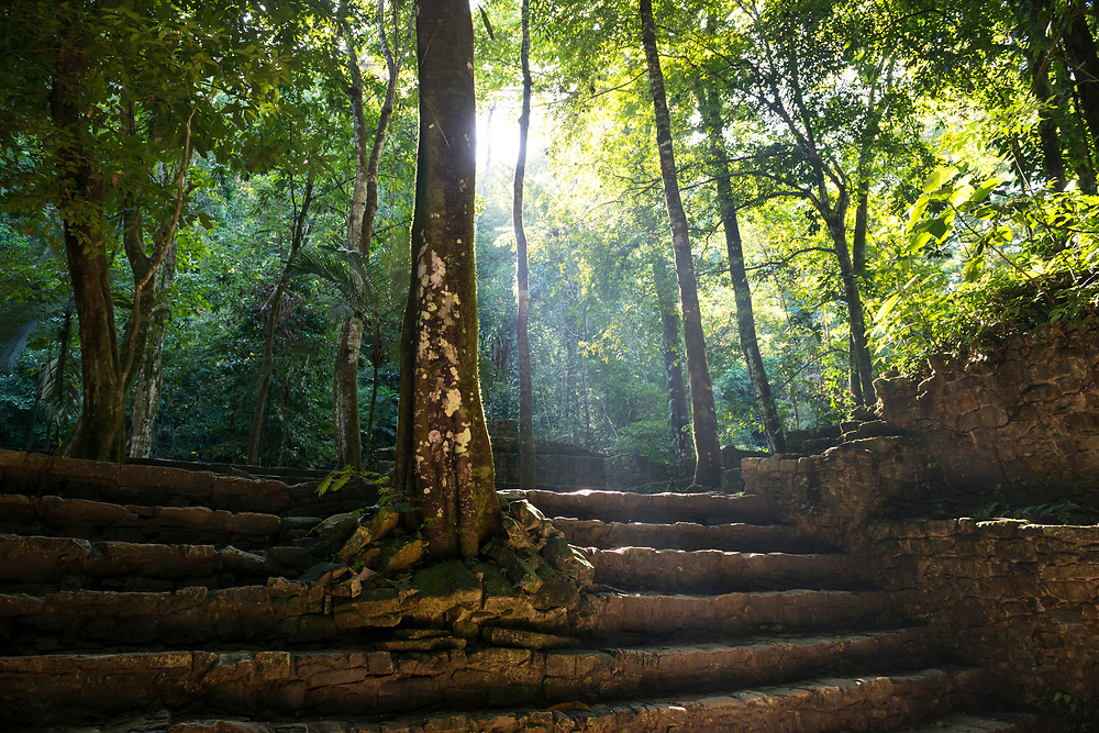 Sunlight filters through jungle foliage in the Mayan ruins of Palenque, Mexico. The Mayan city flourished in the 7th century.
