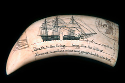 scrimshaw, sperm whale tooth, Physeter macrocephalus