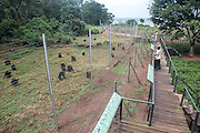 Care givers feed chimpanzees at the Ngamba Island Chimpanzee Sanctuary. While the chimps forage for food in the forest during the day, their food is also supplemented by the sanctuary's staff. 03/15 Julia Cumes/IFAW