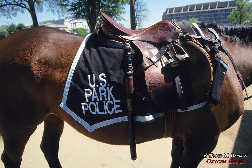 National Park Service Horse