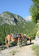 Mules wait to be loaded for the journey uo to the Valbone Pass. Teth, Albania. 04Sep15
