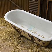 NLD/Bussum/20131219 - Perspresentatie nieuwe real life soap Utopia, badkuip