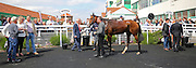 Tempura ridden by Jenny Powell wins the Winner Group Handicap at Brighton Racecourse, Brighton & Hove, United Kingdom on 23 June 2015. Photo by Ellie Hoad.