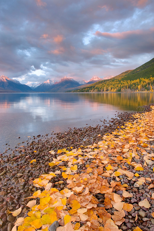 Fallen leaves line the shore of Lake McDonald as a passing storm glows in the evening light, Glacier National Park Montana USA