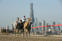 Subject: View of camels training with the Burj Khalifa under construction in the background.  Since then the training tracks have been closed and the Burj Khalifa becomes one of the iconic buildings of the world, Dubai, UAE, Feb 16, 2007. Photo by Silvia Baron / i-Images.