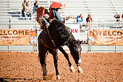 26 NOVEMBER 2011 - CHANDLER, AZ:    TREVOR HAUGHT competes in the bareback bronc competition at the Grand Canyon Pro Rodeo Association (GCPRA) Finals at Rawhide Western Town in west Chandler, AZ, about 20 miles from Phoenix Saturday. The GCPRA Finals is the last rodeo of the GCPRA season. The GCPRA is a professional rodeo association based in Arizona.   PHOTO BY JACK KURTZ