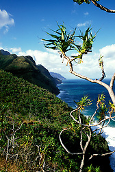 Hawaii: Kauai, along the Kalalau Trail.  Photo hifree102.Photo copyright Lee Foster, 510/549-2202, lee@fostertravel.com, www.fostertravel.com