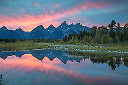 """Grand Teton Sunset reflecting in a Shwabacker Landing beaver pond.<br /> <br /> For production prints or stock photos click the Purchase Print/License Photo Button in upper Right; for Fine Art """"Custom Prints"""" contact Daryl - 208-709-3250 or dh@greater-yellowstone.com"""