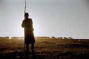 A shepherd, holding a stick to gather his animals, takes his herd out, in Western Mongolis, in the Province of Bayan Olgii, at the base of the TSaast uul mountain. Husbandry is the main livelihood in Mongolia, but was victim of severe drough in the past few years.