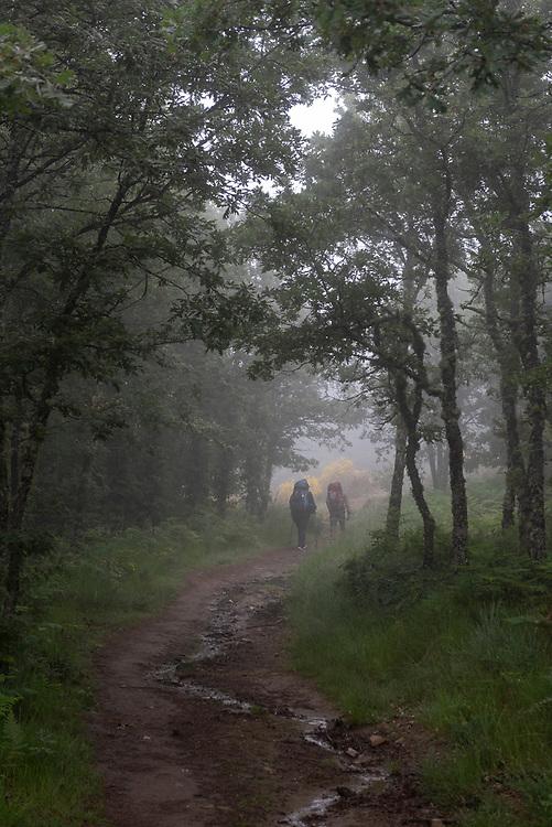 PIlgrims on the Camino de Santiago walk through morning fog after departing Rabanal del Camino, Spain. (July 1, 2018)