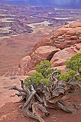 Green River Overlook, Canyonlands National Park, Moab, Utah